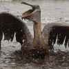 Was The Oil Spill in The Mexican Gulf Ever A Big Mystery?