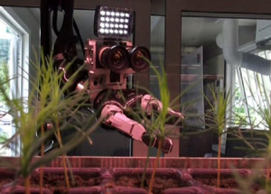 Robots successfully tend tree nursery